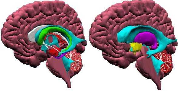 Las Partes Del Cerebro